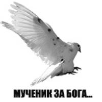 Тимур Ахмедов аватар