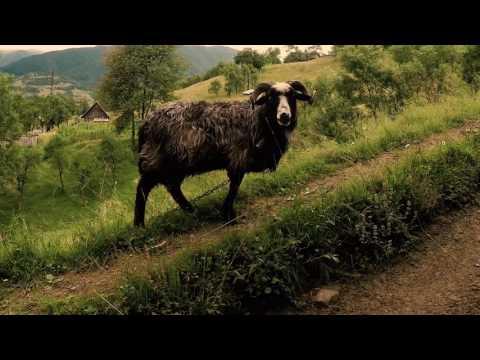 Завораживающая природа горных Карпат Украины.                                                             Закарпатская область, Раховский р-н.