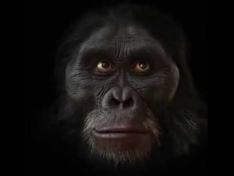 Эволюция человеческих лиц за последние шесть миллионов лет
