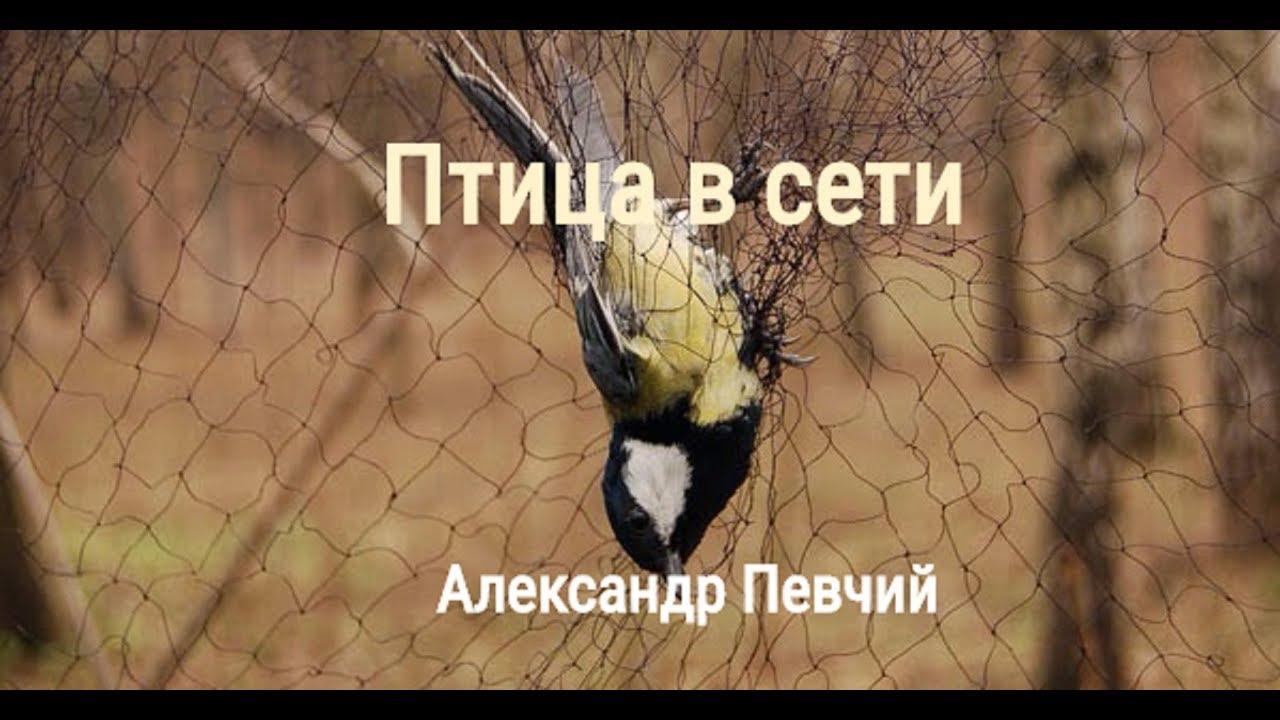 Птица в сети