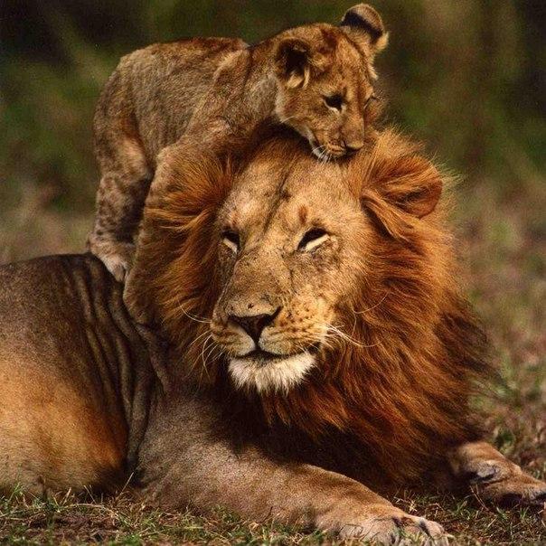 Мать Лев – отрицательные черты характера